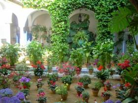 Patio fleuri en Andalousie