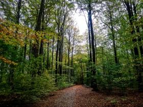Forêt à Aarhus