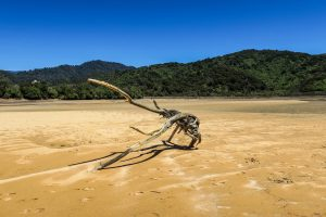 Plage d'Abel Tasman