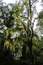 Un arbre du Milford Track