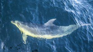 Les dauphins de Doubtful Sound