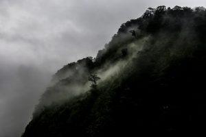 Arbres de Doubtful Sound