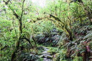 La forêt magique du Milford Track