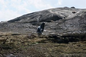 Les otaries de Doubtful Sound