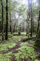 Forêt sur le Kepler