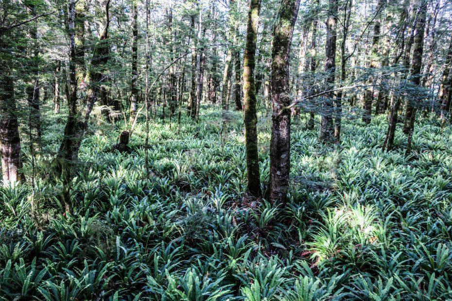 Forêt et fougères