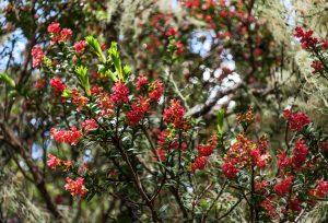Plante rouge en forêt