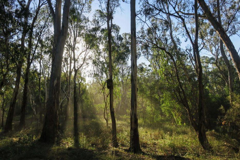 Lumière du soir dans les arbres