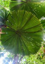 Feuille d'arbre des tropiques