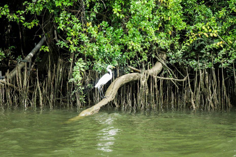 Oiseau dans la mangrove