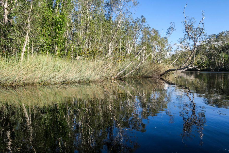 Noosa, les Everglades