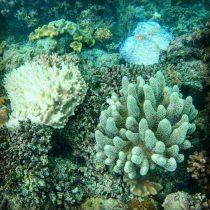 Plongée à Cairns