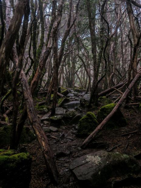 Forêts mystérieuses