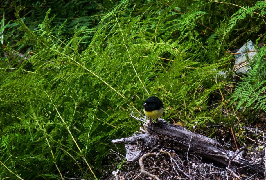 Fougères et petit oiseau