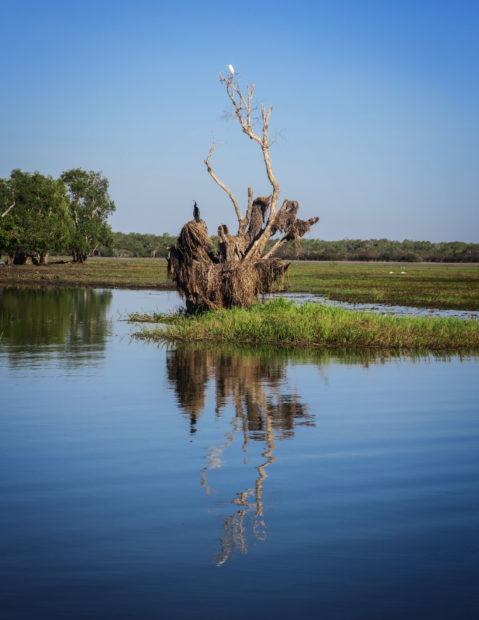 Arbre et ses oiseaux, Kakadu