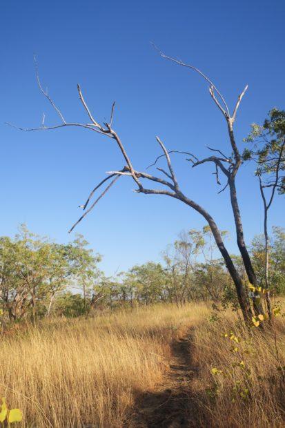 La savane du Jatbula Trail