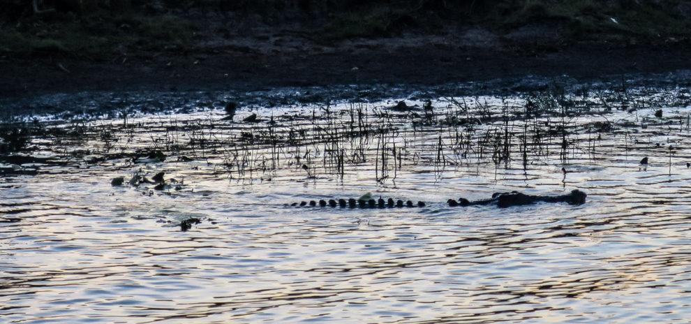 Crocodile dans la rivière de Kakadu