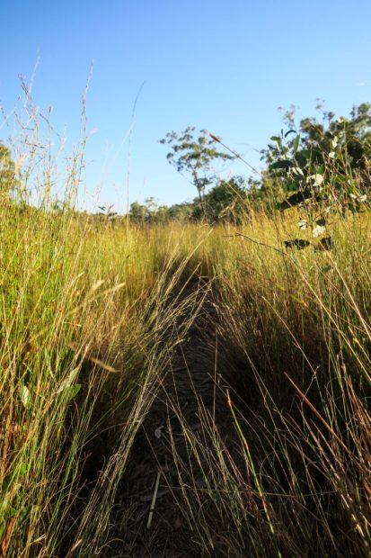 Savane sur le Jatbula Trail