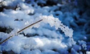 neige-lumière